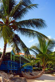 Forêt tropicale des Barbade Photos libres de droits