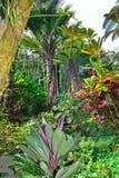 Forêt tropicale en Hawaï image libre de droits