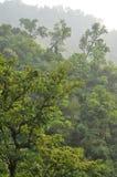 Forêt tropicale en Himalaya un jour ensoleillé Images libres de droits