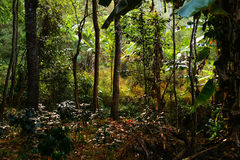 Forêt tropicale enchantée et mystérieuse photo stock