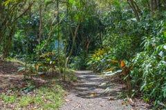 Forêt tropicale hawaïenne dans le Koolaus Photos stock