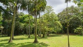 Forêt tropicale hawaïenne dans le Koolaus Images stock