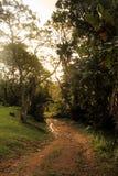 Forêt tropicale humide de crépuscule Images libres de droits