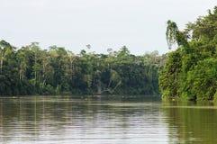 Forêt tropicale le long de la rivière kinabatangan, Sabah, Bornéo Malaysi images stock