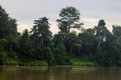 Forêt tropicale le long de la rivière kinabatangan, Sabah, Bornéo Malaysi image libre de droits