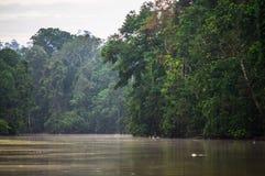 Forêt tropicale le long de la rivière kinabatangan, Sabah, Bornéo Malaysi photos stock