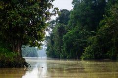 Forêt tropicale le long de la rivière kinabatangan, Sabah, Bornéo malaysia Images stock