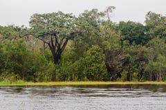 Forêt tropicale Manaus Photos stock