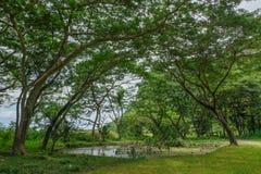 Forêt tropicale profonde dans le frome Thaïlande de prachubkirikhun de parc national de Khao Samroiyod photos libres de droits