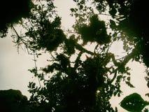 Forêt tropicale sauvage sur les montagnes des Andes peru beau chiffre dimensionnel illustration trois du sud de 3d Amérique très Image libre de droits