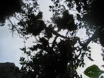 Forêt tropicale sauvage sur les montagnes des Andes peru beau chiffre dimensionnel illustration trois du sud de 3d Amérique très Photos libres de droits