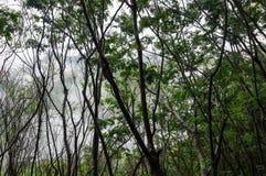 Forêt tropicale sur l'île de Sumatra Photographie stock