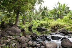 Forêt tropicale sur le cuisinier Islands Image stock