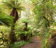 Forêt tropicale tempérée Photos libres de droits