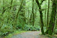 Forêt tropicale tempérée Photographie stock libre de droits