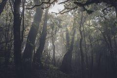 Forêt tropicale tropicale dans l'obscurité photographie stock libre de droits