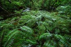 Forêt tropicale tropicale de fougère d'arbre Photographie stock