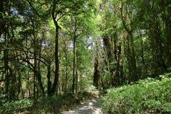 Forêt tropicale tropicale de jungle dans Chiang Mai, Thaïlande photo stock