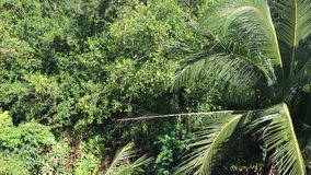 Forêt tropicale tropicale et ciel bleu banque de vidéos
