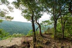 Forêt tropicale tropicale, parc national Thaïlande (le monde H de Khao Yai Photographie stock libre de droits