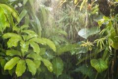 Forêt tropicale tropicale verte de fond Photographie stock libre de droits