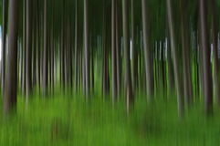 Forêt trouble abstraite Photos stock