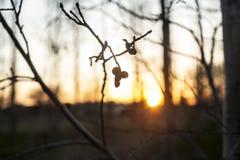 Forêt trouble au coucher du soleil Image libre de droits
