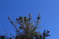 Forêt typique en Galicie photographie stock libre de droits