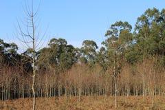 Forêt typique en Galicie images stock