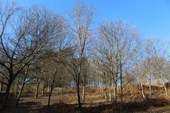 Forêt typique en Galicie photo libre de droits