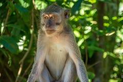 Forêt Ubud de singe dans Bali Indonésie Image stock