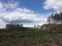 Forêt ukrainienne Photo stock