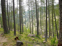 Forêt, vallée des merveilles, Frances Images stock