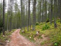 Forêt, vallée des merveilles, Frances Image stock