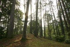Forêt vers la fin d'après-midi Photo libre de droits