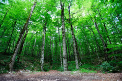 Forêt vert clair Image stock