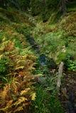 Forêt verte Photo libre de droits