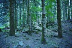 Forêt verte Photographie stock libre de droits