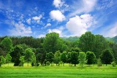 Forêt verte Photos libres de droits