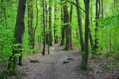 Forêt verte Image libre de droits