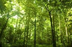 Forêt verte images libres de droits