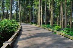 Forêt verte Photographie stock