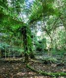 Forêt verte Photos stock