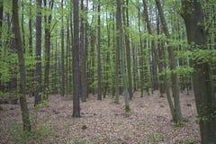 Forêt verte Photo stock