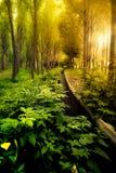 Forêt verte au coucher du soleil Image stock