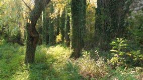 Forêt verte avec des arbres clips vidéos