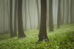 Forêt verte avec des fleurs au sol photographie stock libre de droits