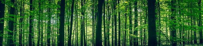 Forêt verte avec des silhouettes d'arbre Photo libre de droits