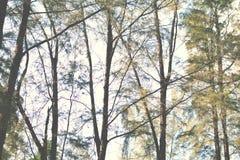 Forêt verte avec le bokeh léger photos stock