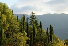 Forêt verte avec les arbres à feuilles persistantes sur la pente de montagne Images stock